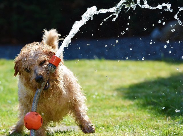 Perro disfrutando del verano
