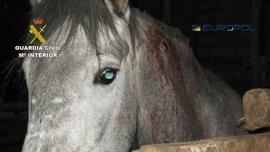 Desmantelada una red internacional que comerciaba con carne de caballo no apta para el consumo