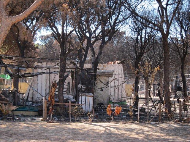 Camping Doñana tras el incendio de junio.