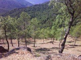 Riesgo de incendios forestales en el Bajo Ebro, el Jiloca y Rodeno