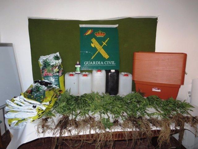 Soria: droga y plantas incautadas