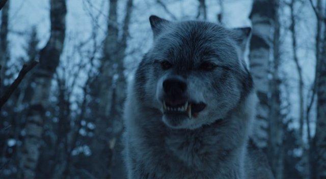 Juego de tronos lobo