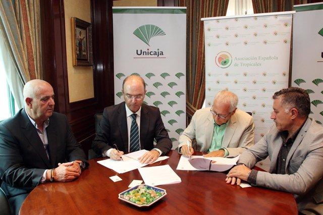 Firma convenio entre Unicaja Banco y productores de fruta tropicales.