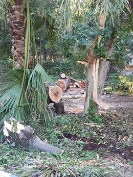 Àrbol caído en el parque de María Luisa.