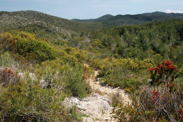 Matorral del Parque Natural del Garraf