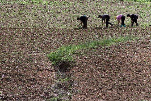 Cultivos en Corea del Norte