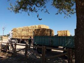 La Diputación de Badajoz envía un camión de heno para los ganaderos afectados por el incendio de Arroyo de San Serván