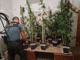 Detenido un hombre con una orden de ingreso en prisión y una plantación de marihuana en su vivienda