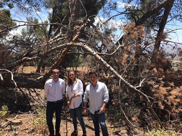 PP de Granada exige limpieza en la Sierra de Parapanda
