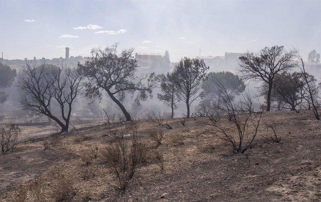 Efectos del incendio en el entorno de Doñana una semana después de declararse