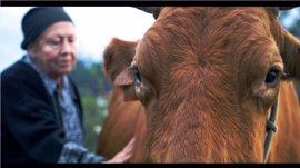 'Las vacas de Wisconsin', de Sara Traba, gana el Premio al Mejor Cortometraje en el 23º Festival Ibérico de Cine