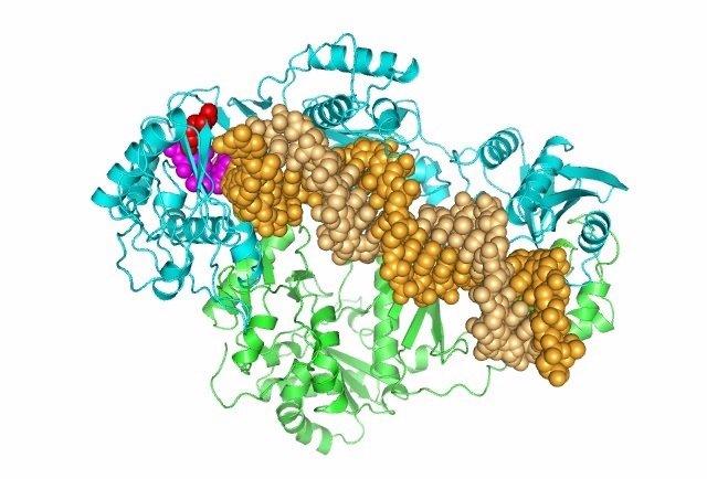 Virus VIH-2