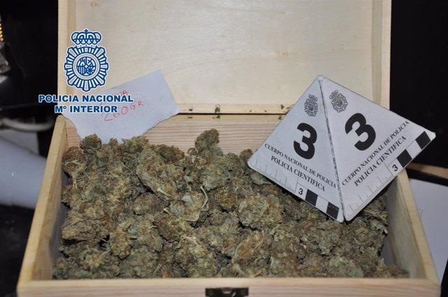 Marihuana intervenida en un club cannábico de Palau Solità