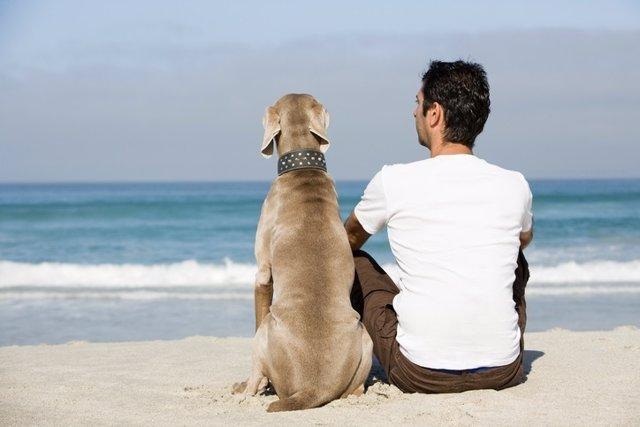Perro, dueño, animal doméstico, playa