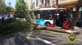 Diez heridos al chocar un autobús contra una palmera en Alicante