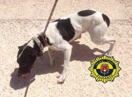 La Unidad Canina de Alicante rescata a dos perros abandonados en un garaje