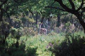 Junta aprueba la convocatoria de subvenciones en áreas de influencia socioeconómica de los Parques Nacionales