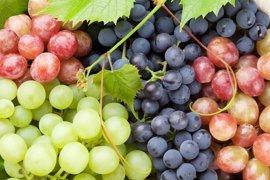 Compuestos de la uva aumentan la energía de las células renales