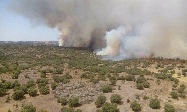 Zamora.- Incendio en Pino del Oro