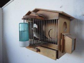 Investigan al dueño de un negocio por tener un ave protegida y comercializar jaulas trampa