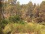 Foto: Perimetrado en su totalidad el incendio de Yeste