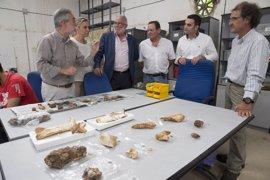 Hallan en La Garma un húmero de elefante y una estalagmita que data clima de 20.000 años