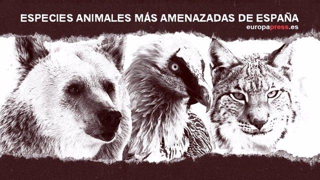 Especies animales más amenazadas de España