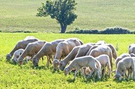 Publicada la Orden de ayudas dirigidas a los ganaderos de extensivo para hacer frente a la situación de sequía