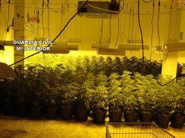 La Guardia Civil detiene a dos personas y se incauta de 990 plantas de marihuana en Roquetas de Mar (Almería)