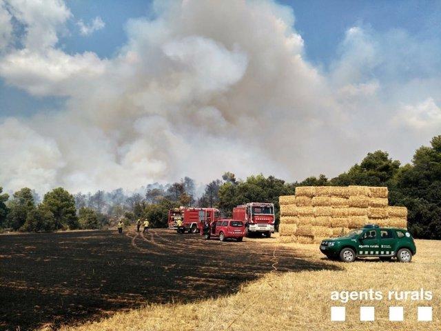Incendio en Montargull, en Artesa de Segre (Lleida)