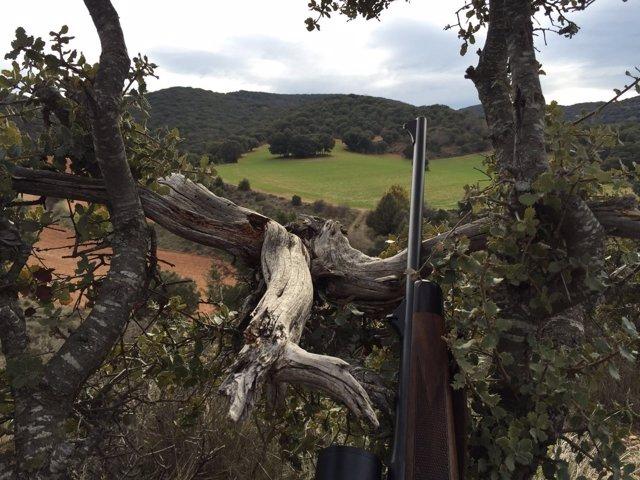 Uno de los puestos de espera de caza en Aragón.