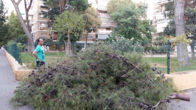 Árbol caído en el Porvenir