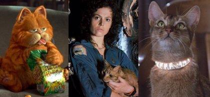 Día Internacional del Gato: 20 gatos que hicieron historia en el cine y la televisión