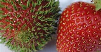 Curioso: 11 frutas y vegetales germinando antes de tiempo