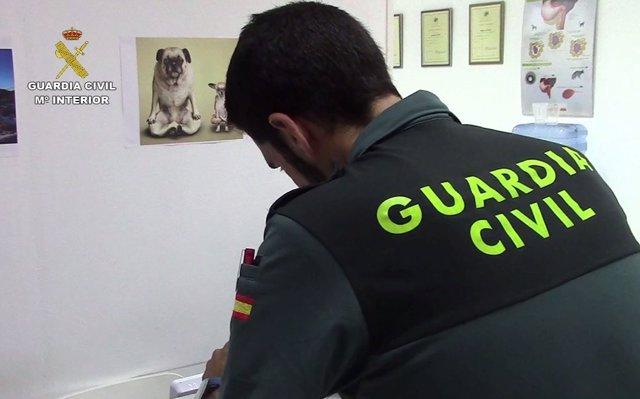 Investigan a un veterinario por maltrato animal y estafa en Palma