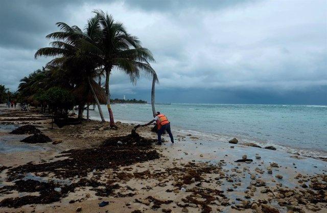 Un trabajador retira las hojas de palmera tras el paso del 'Franklin' en México.