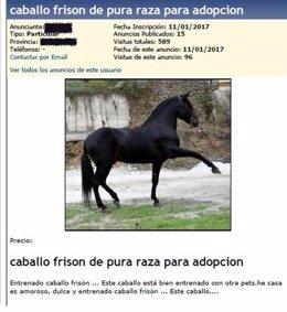 Anuncio del caballo colgado en internet.