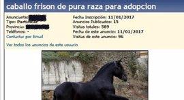Detenido por estafar a un vallisoletano al que ofreció en internet adoptar un caballo
