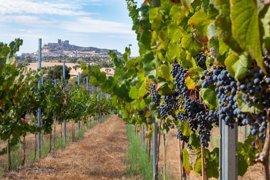La DOC Rioja incorporará dos nuevas categorías para identificar mejor la procedencia de sus vinos