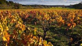 """Gobierno Vasco considera que los cambios en la DOC Rioja favorecen la """"diferenciación"""" de los vinos alaveses"""