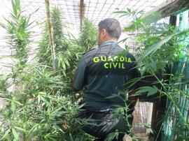 Cae una banda internacional dedicada a vender marihuana al este de Europa desde Alicante