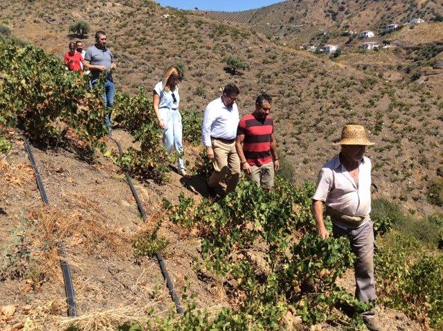 Sánchez Haro consejero agricultura málaga pasa uva axarquía patrimonio mundial