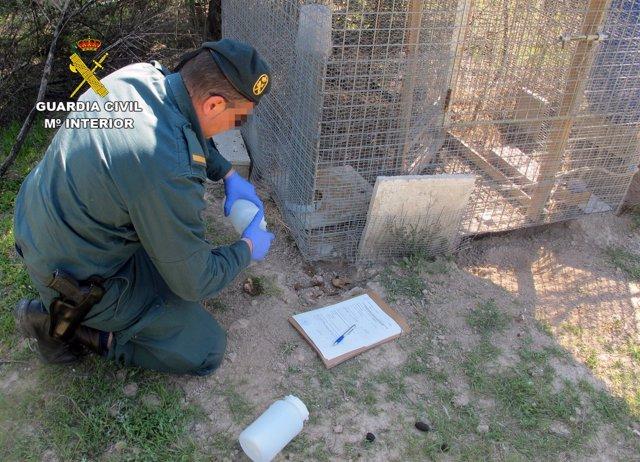 Guardia Civil investiga a dos personas por el uso ilegal de venenos