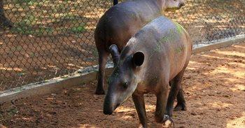 Roban varios animales de un zoo en Venezuela para su posterior consumo