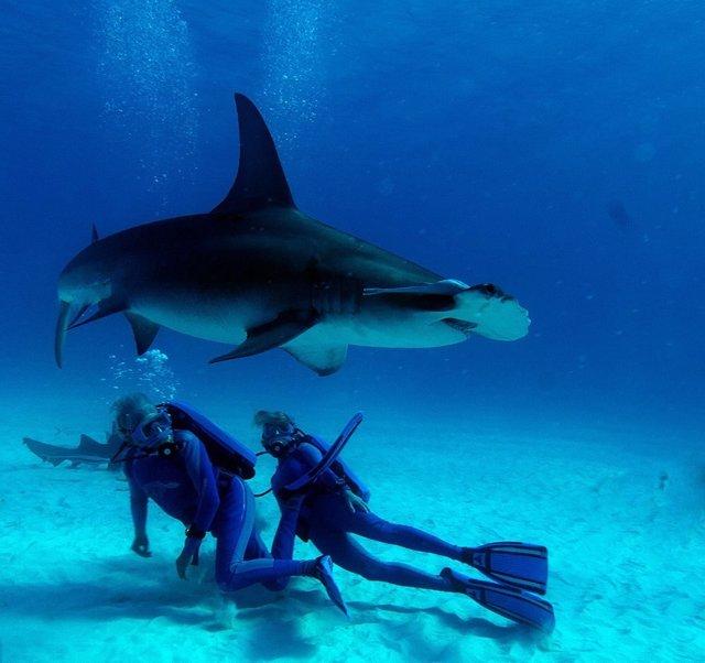Imagen de la película Wonders of the Sea 3D