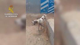 Investigado por maltrato a siete perros famélicos hallados en su finca de Sorbas (Almería)