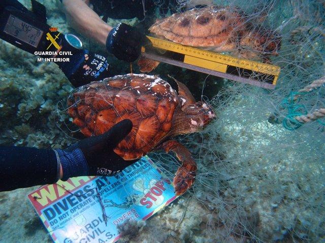 Los GEAS recuperan una red de pesca con dos tortugas ahogadas