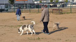 Reus multiplica per nou la identificació de gossos gràcies a una campanya informativa (AYUNTAMIENTO DE REUS)