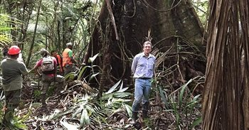 Los árboles tropicales mantienen altas tasas de acumulación de carbono en la vejez