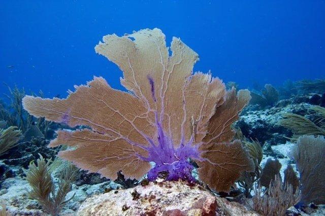 Arrecife de coral en Puerto Rico
